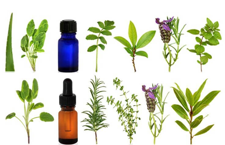 What is essential oils